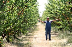 Farmer Al in the orchard